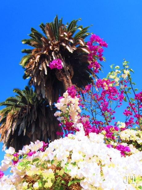 flowersntree
