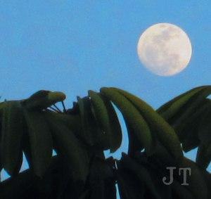 moon_over_LA