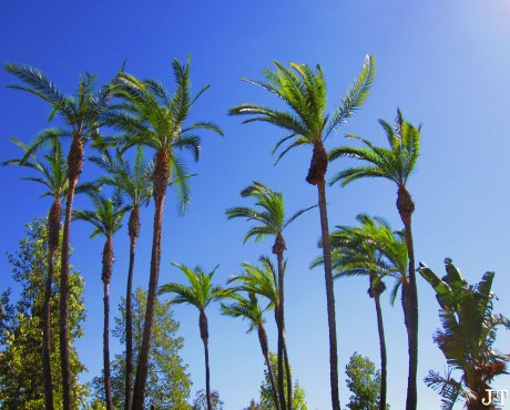 palms2