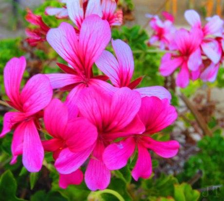 thurs_flower