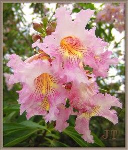 tree_flower2