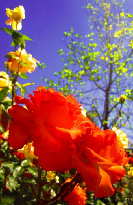 flower_sky2