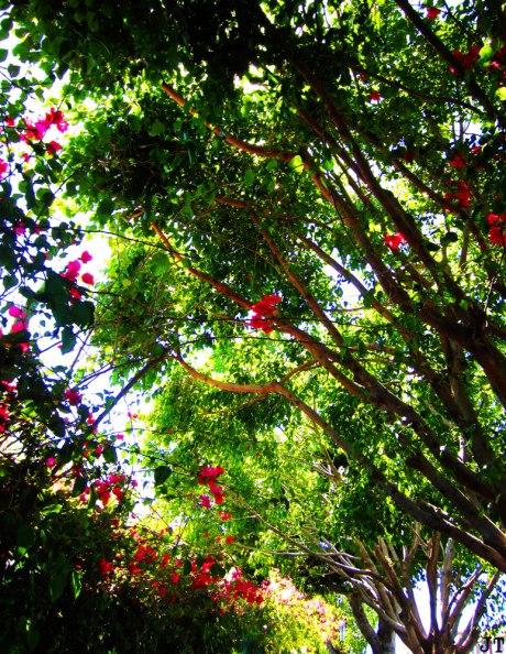 flowerNTrees