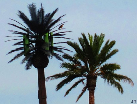 cell_palm
