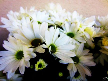 flowers_in_spring