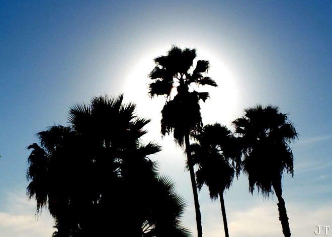 Halo Palm