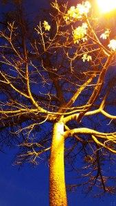 TreeAtDusk